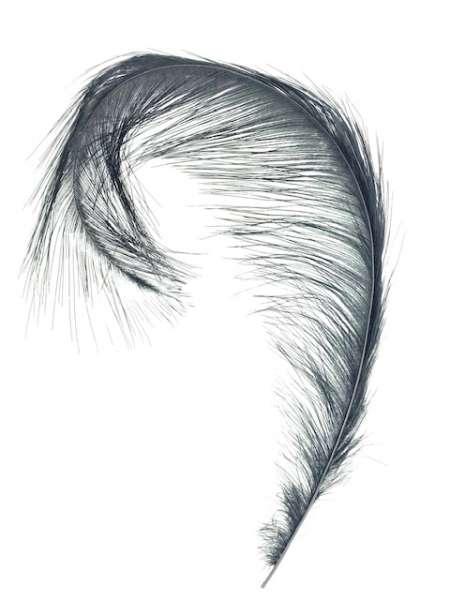 Nandu Feather (Rhea)